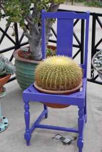 cactus in chair