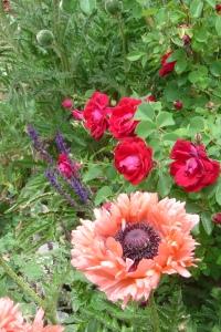Poppy sage rose