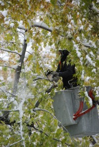 City Forester crews clearing damaged trees
